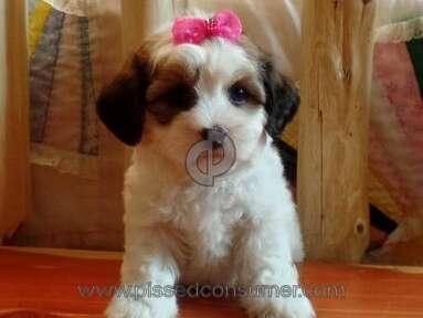 Craigslist - Pet / Puppy Scam.