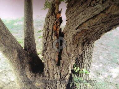 North Star Mutual - Tree limb fell on car from north star customer