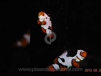 Clown Fish USA Shopping review 27259