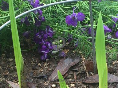 Bloomsz Flowers / Florist review 127997