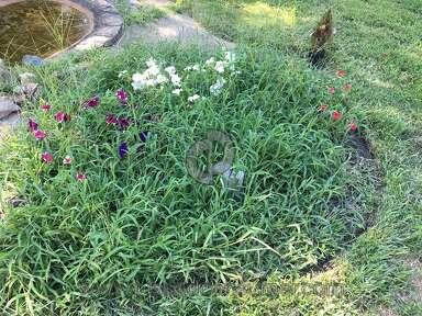 Trugreen Lawn Fertilization Service review 152130