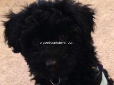 WV puppy Pet Stores review 114529