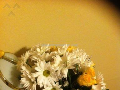 Wesley Berry Flowers Bouquet review 97833