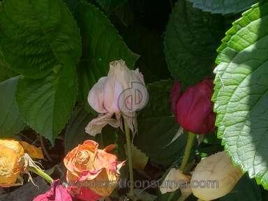Sharis Berries Arrangement review 292240