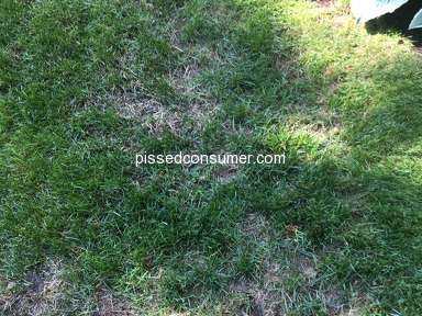 TruGreen Lawn Service review 306008