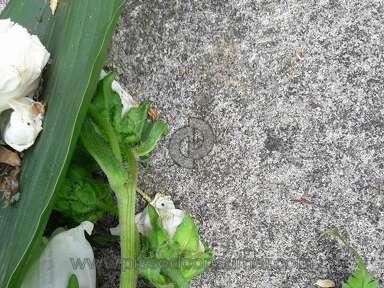 EFlorist Flowers / Florist review 299861