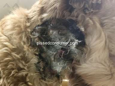 Amazon - Bark Collar burned dog
