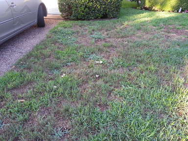 Trugreen RUINED my beautiful lawn.