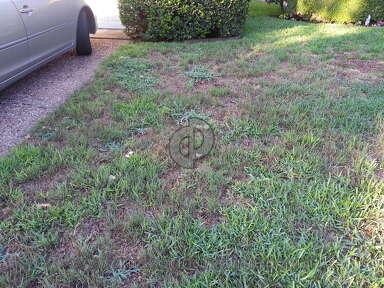 Trugreen RUINED my beautiful lawn.