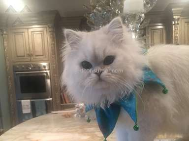 Christypaw Persians - PURCHASED 3 KITTENS FROM CHRISTYPAW
