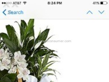 ProFlowers Flower Basket review 96367
