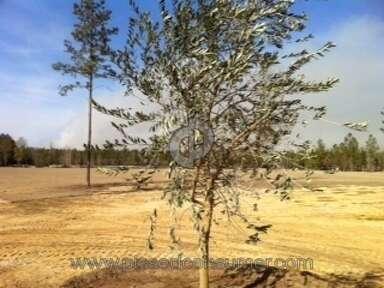 Ty Ty Nursery Tree review 6111