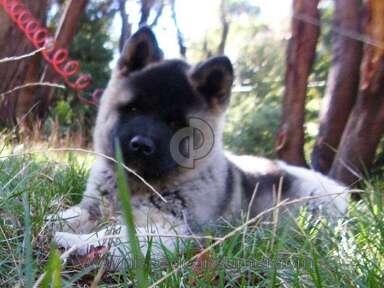 Puppyfind Animal Services review 50771