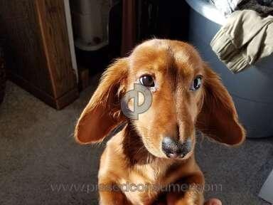 Ammardan Kennels - My dog is healthy and intelligent!!