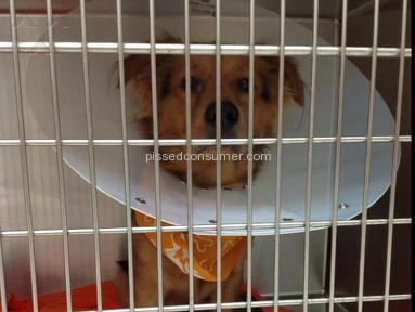 Banfield Pet Hospital - 1 year old dog died during neutering