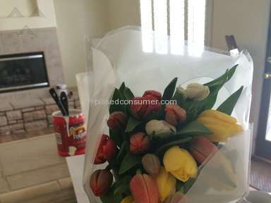 Proflowers Tulips Flowers review 132181