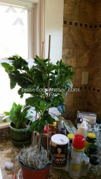 Better Homes And Gardens Blooming Tranquility Gardenia Plant Plant