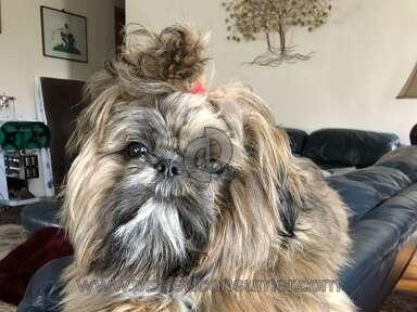Petco Pet Stores review 294362