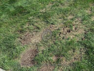 Lush Lawn Lawn Service review 166086