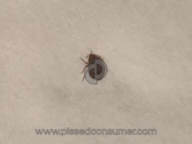 Budget Inn - Bed bugs