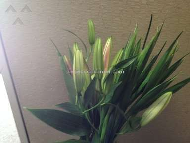 ProFlowers Flowers review 11065