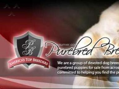 Purebred Breeders - Beware DONT Buy/Sell Purebredbreeders.com aka BuyPuppiesDirect.com FRAUD! SCAM!