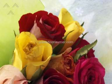 From You Flowers One Dozen Long Stemmed Red Roses With Godiva Chocolates And Bear Arrangement review 131707
