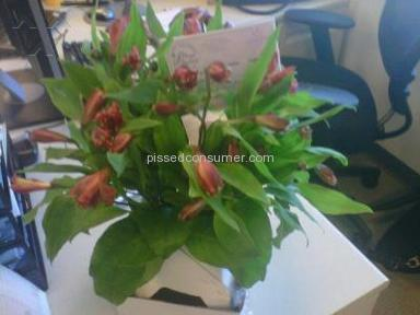 Proflowers Delivery Service review 4783