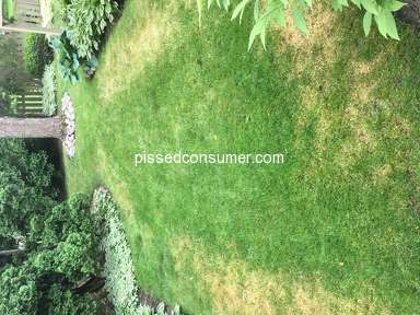 TruGreen Lawn Service review 298000