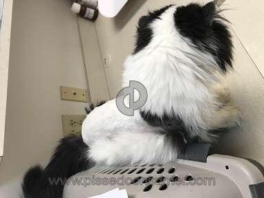 Petsmart Cat Grooming Service review 281632