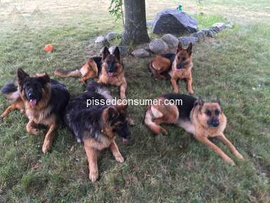 Fleischerheim Animal Services review 286636