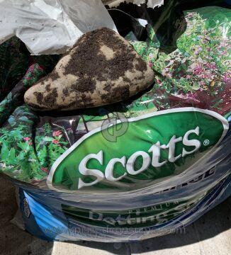 Scotts Potting Soil