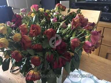 Prestige Flowers Roses Flowers review 285694