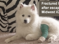 Midwest Homes For Pets - Midwest dog crate danger !