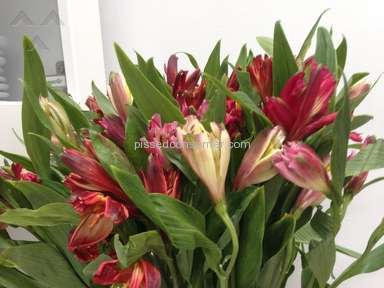 ProFlowers Flowers review 57353