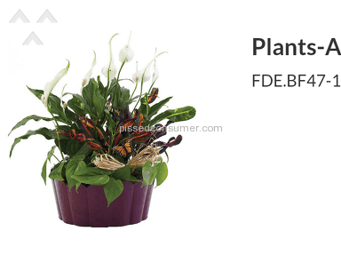 Flower Delivery Express Plant review 96503