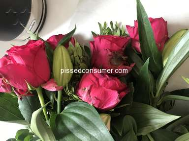 Prestige Flowers Roses Flowers review 311988