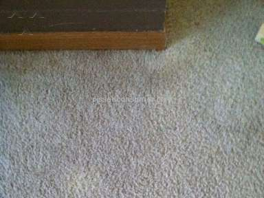 Planet Urine Ruined my Carpet