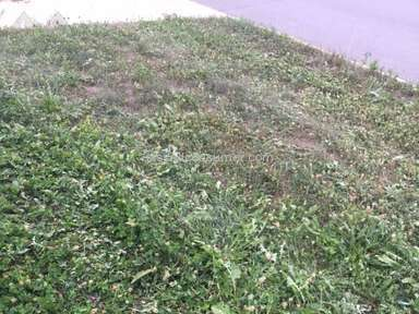 Trugreen Lawn Service review 174906