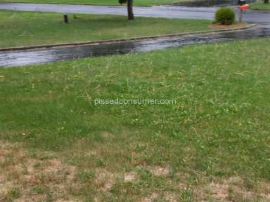 Trugreen Lawn Aeration Service review 162444