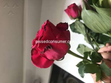 Prestige Flowers Roses Flowers review 311984