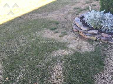 Trugreen Lawn Service review 125521