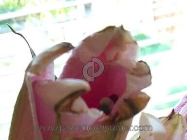 ProFlowers Bouquet review 87645