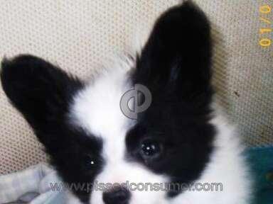 Banfield Pet Hospital Pet Vaccination review 3805