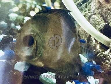 Somethingsphishy - Sold inferior fish.
