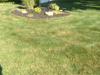 Trugreen Lawn Service review 225126