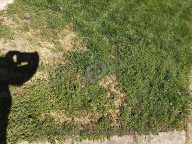 Pennington Seed Grass Seeds review 287646