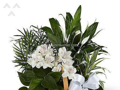 ProFlowers Flower Basket review 96369