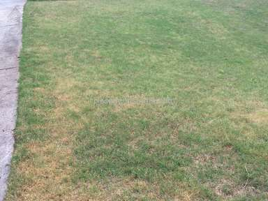 Trugreen Lawn Service review 137161