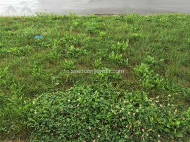 Trugreen Lawn Service review 174904